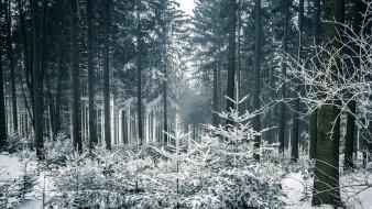 природа, лес, деревья, зимняя, сказка, снег