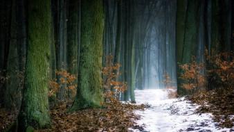природа, лес, беловежская, пуща, польша