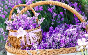 обои для рабочего стола 1920x1200 цветы, лаванда, лиловый