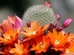 обои для рабочего стола 2560x1920 цветы, кактусы, оранжевый, иголки