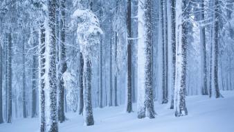 природа, лес, зима, красота, снежные, деревья, снег