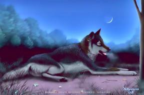 животное, хищник, растение, природа, 2020, calendar, волк