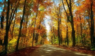 природа, дороги, проселочная, дорога, осень, лес, листопад