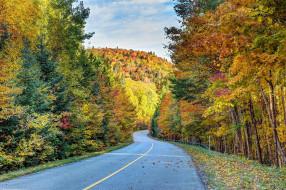 природа, дороги, листопад, шоссе, осень