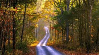 природа, дороги, листопад, лес, дорога, осень, проселочная