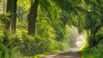 природа, дороги, красота, лес, дорога