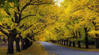 природа, дороги, шоссе, осень, листопад