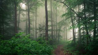 природа, лес, туман, деревья