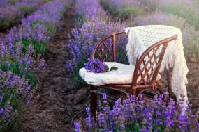 цветы, лаванда, лиловый
