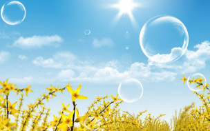 цветы, желтые, ветки, небо, облака, пузыри