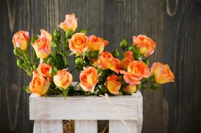 цветы, розы, персиковый, бутоны