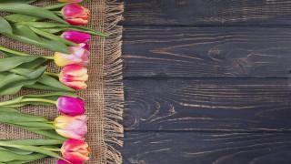 цветы, тюльпаны, бутоны, разноцветные