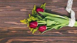 цветы, тюльпаны, букет, бутоны, лента