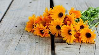 цветы, календула, ноготки