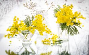 цветы, мимоза, желтый