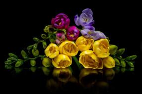 цветы, фрезия, разноцветные