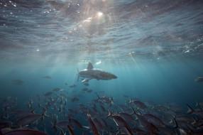 море, подводный, обитатели, рыба, акула, пасть, зубы, shark, глубина, опасность, хищник, океан, вода