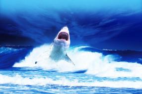 обитатели, shark, акула, хищник, опасность, море, вода, глубина, зубы, пасть, рыба, океан, подводный
