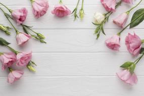 цветы, эустома, розовый