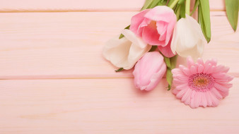тюльпан, гербера