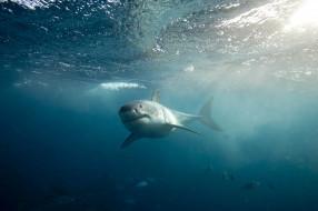 хищник, рыба, акула, пасть, глубина, зубы, shark, вода, море, обитатели, подводный, океан, опасность