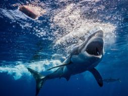 вода, глубина, рыба, море, shark, акула, пасть, зубы, обитатели, подводный, океан, хищник, опасность