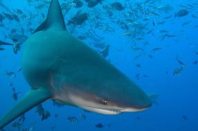 рыба, акула, shark, обитатели, подводный, глубина, вода, море, океан, зубы, пасть, опасность, хищник