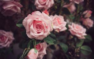 искусственные, цветы