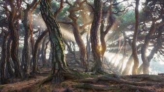 природа, лес, сосновый, южная, корея