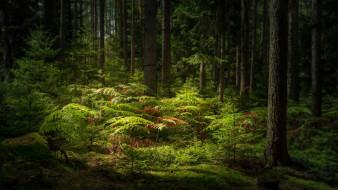 природа, лес, красивое, место, деревья
