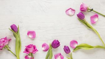бутоны, роза, тюльпан