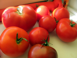 еда, помидоры, томаты