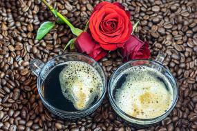 еда, кофе,  кофейные зёрна, зерна, розы