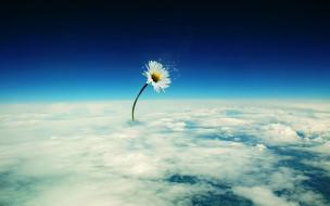 цветок, планета, ромашка