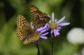животные, бабочки,  мотыльки,  моли, martin, dollenkamp