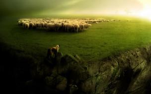 животные, разные вместе, овцы, отара, луг, собака, обрыв