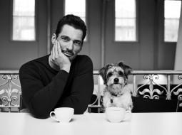 мужчины, david gandy, чашки, собака