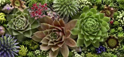 цветы, разные вместе, martin, dollenkamp, текстура, бутоны