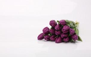 цветы, тюльпаны, лиловый