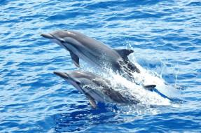 дельфины, животные, вода