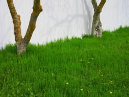 природа, луга, весна, 2018, апрель