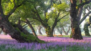 природа, парк, южная, корея