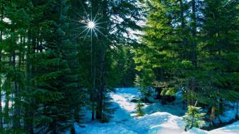 природа, лес, национальный, заповедник, уилламетт, штат, орегон, сша