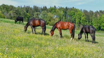животные, лошади, луг, трава, деревья