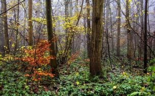природа, лес, деревья