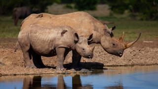 животные, носороги, птицы, берег, озеро