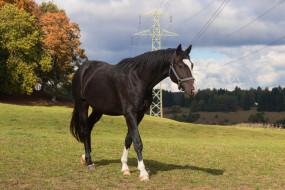 животные, лошади, лошадь, луга, деревья, провода