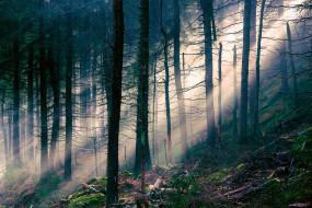 природа, лес, лучи, валежник, склон
