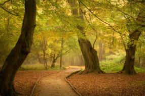 природа, лес, осень, деревья, парк, англия, дорожка, тропинка