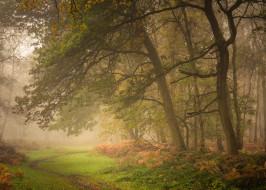 природа, лес, осень, деревья, англия, утро, тропинка